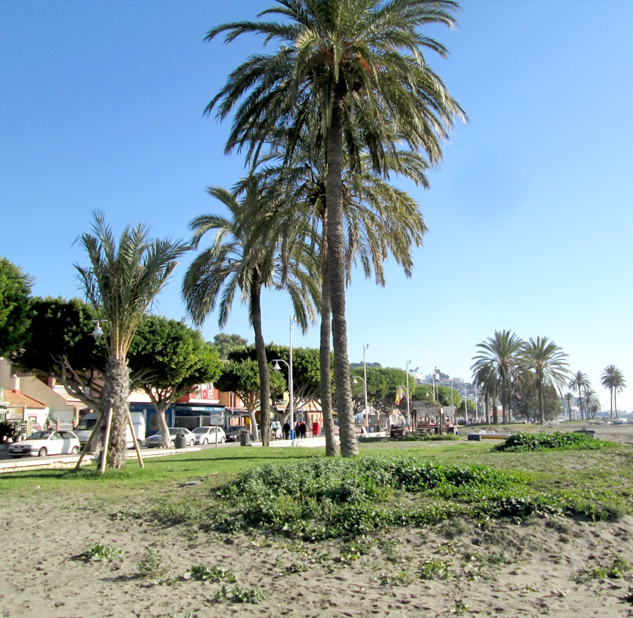 playa palo